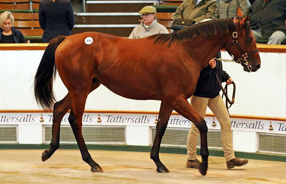 tattersalls-lot875