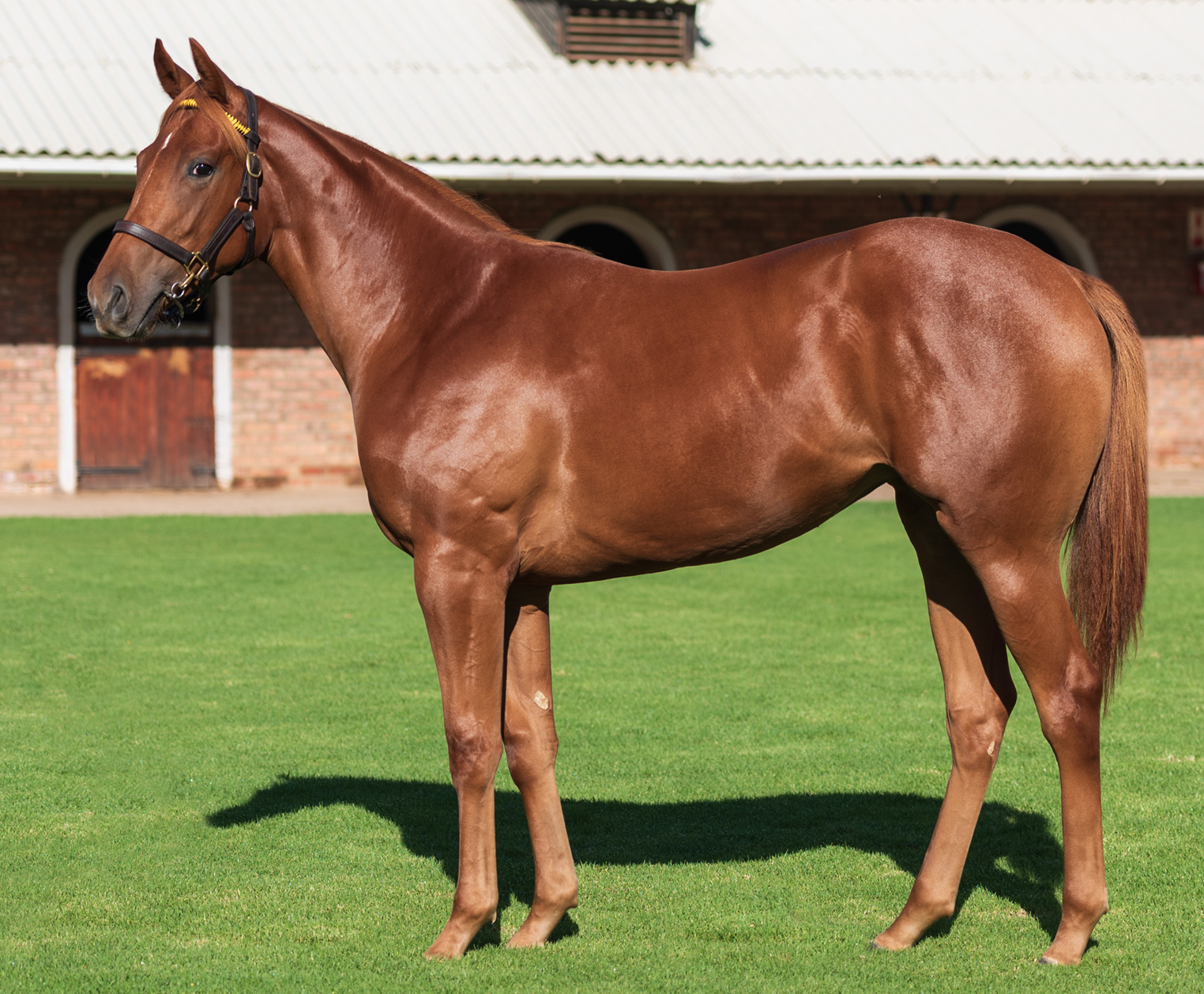 Maine Chance Farms   One of South Africa's leading stud farms