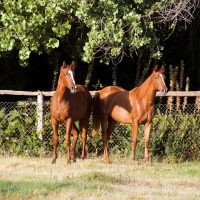 maine-chance-yearlings-DSC_0400